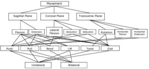 Fundamental Movements / Functional Movements / Primal Movements Continuum