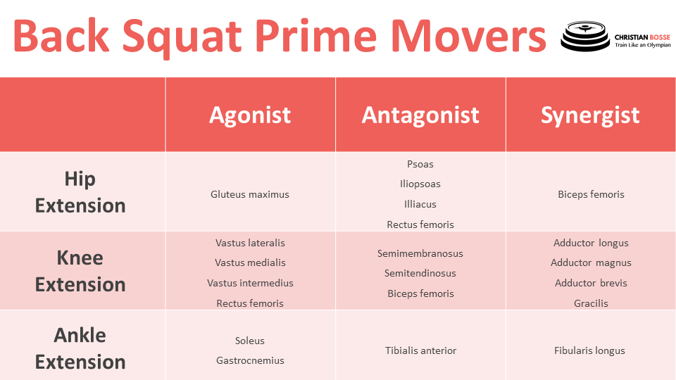 What is the prime mover in a Back Squat